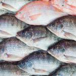 L'art de conserver le poisson : 4 façons de prolonger la durée de conservation du tilapia